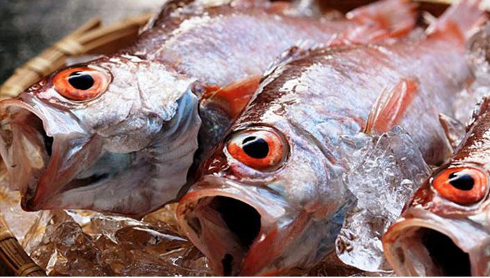 nodoguro-fish