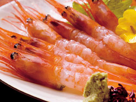 sweet shrimp (Ama-ebi/ 甘エビ)Sashimi or Sushi
