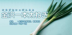 kanazawa-nagi-onion