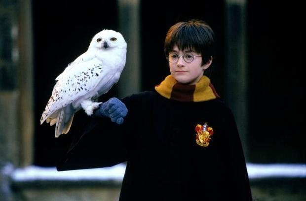 Harry and owl