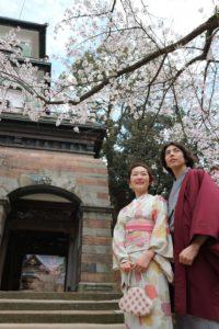 はれまロマン着物カップル尾山神社のロケ撮桜