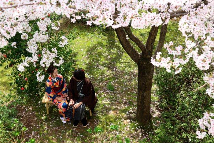 couple-sittingunder-a cherrytree-kimono-kanazawa-haremaroman
