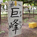 grapes-kyohou