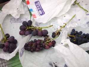 moai-nouen-grapes4
