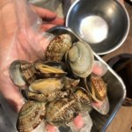 Catch clams
