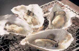 oyster-ishikawa