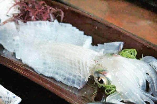 aoriika-squid-ishikawa
